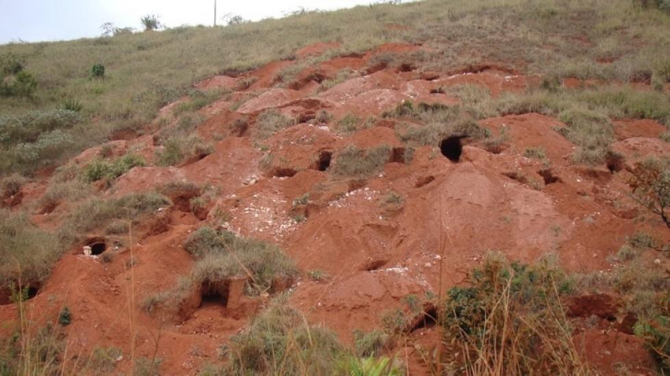 Biodiversidade em cavidades artificiais no Estado de Minas Gerais